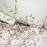 Как избавиться от муравьёв в квартире. Народные советы