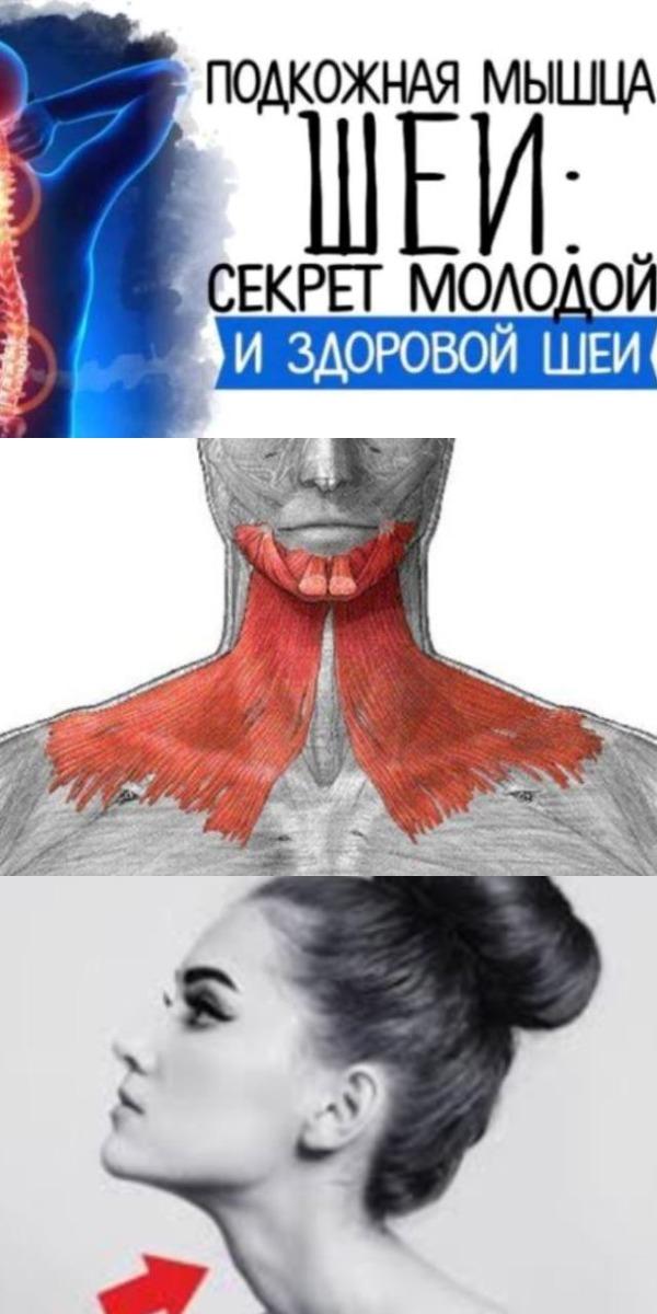Подкожная мышца шеи секрет молодой и здоровой шеи