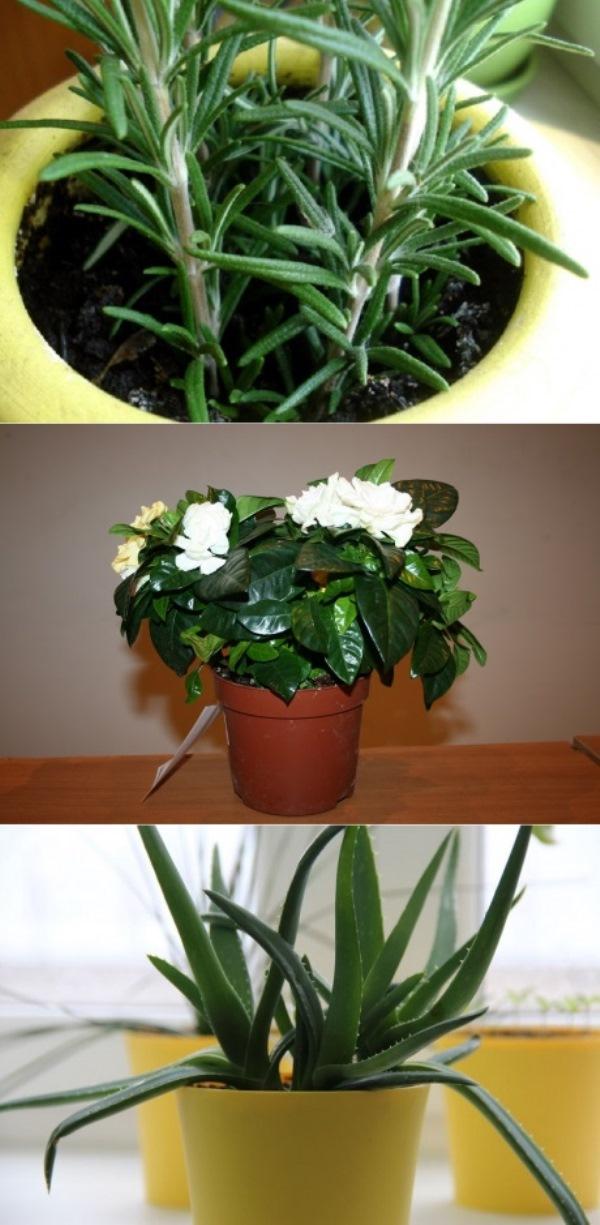 7 домашних растений, которые принесут позитивную энергетику в твой дом! Избавилась от растений-вампиров.