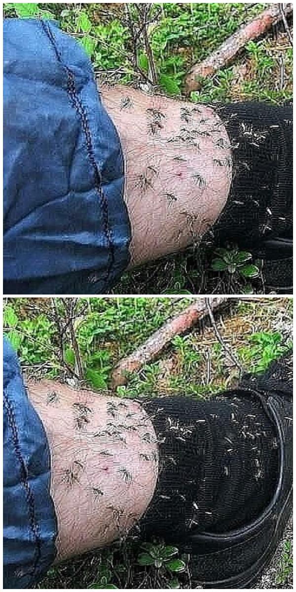 Средство от комаров и мошек своими руками